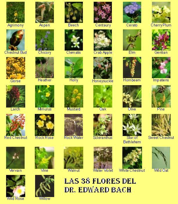 38-flores-de-bach