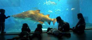 acuario de sevilla