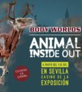 Animal Inside Out Siviglia - Exhibition Casinò