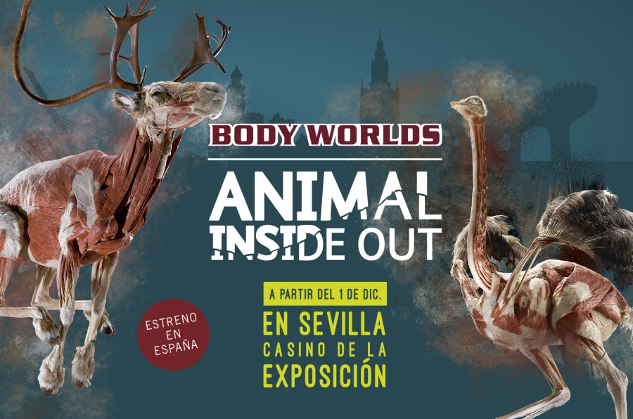 Animal Inside Out Sevilla – Casino de la Exposición