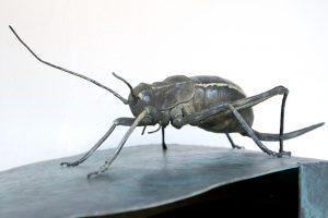 Invertebrados de Andalucía. Exposición permanente en La Casa de la Ciencia de Sevilla
