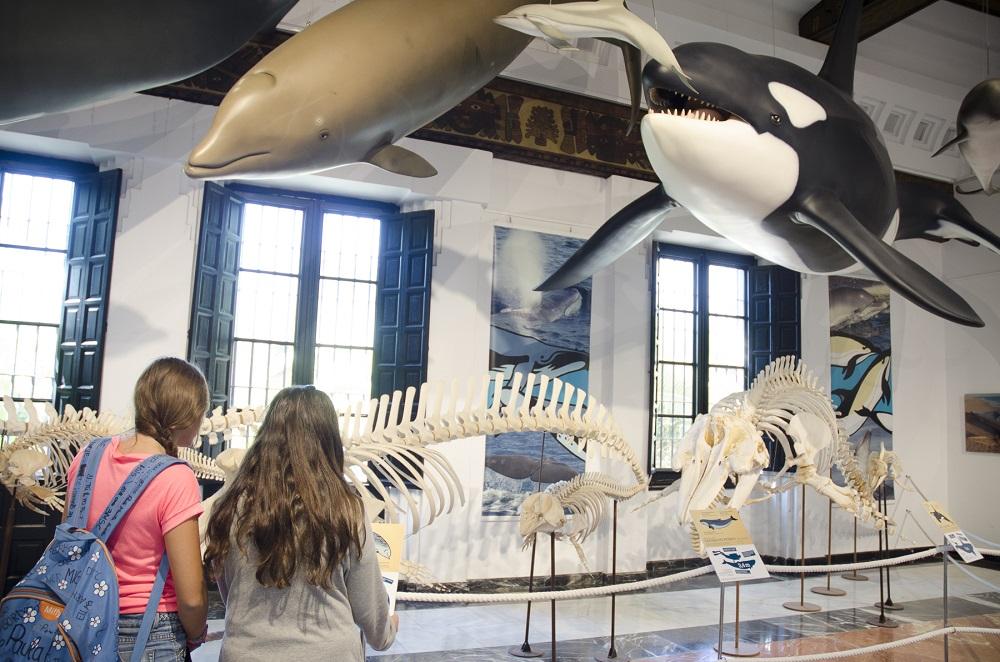 Exposición: La mar de cetáceos en Andalucía – Casa de la Ciencia Sevilla